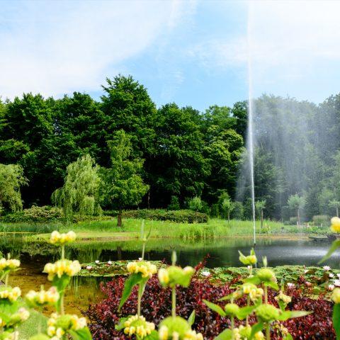 Landelijke tuin met vijver