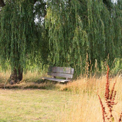 Een groen paradijs in het Noord-Hollandse veenlandschap